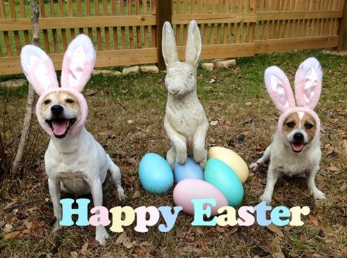Happy Easter From All Of Us At Dogwork .com