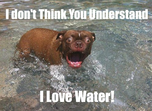 Funny -dog -likes -water -picture1
